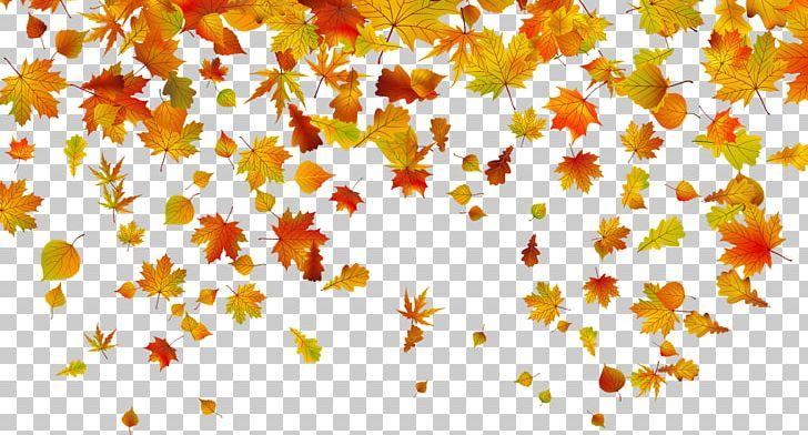 Autumn Leaf Color PNG, Clipart, Autumn, Autumn Leaf Color, Autumn Leaves, Blade, Branch Free PNG Download