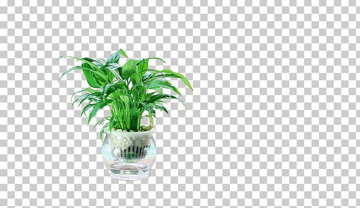 Flowerpot Houseplant Desk Humidifier PNG, Clipart, Capital City, Database, Desk, Flowerpot, Food Drinks Free PNG Download
