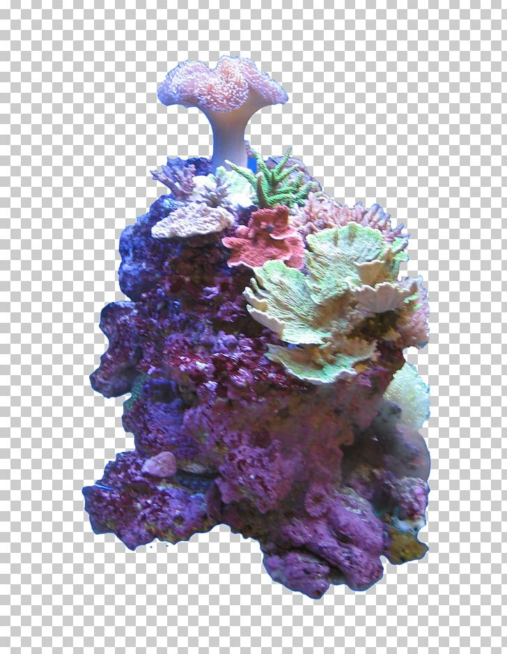 Adobe Photoshop Stony Corals Sea PNG, Clipart, Computer Software, Coral, Coral Reef, Deep Sea, Deep Sea Creature Free PNG Download