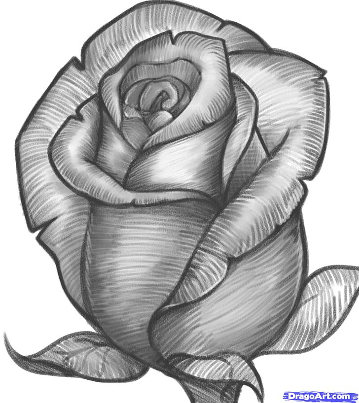 Drawing Rose Pencil Sketch Png Clipart Art Art Museum Artwork Black And White Cartoon Free Png
