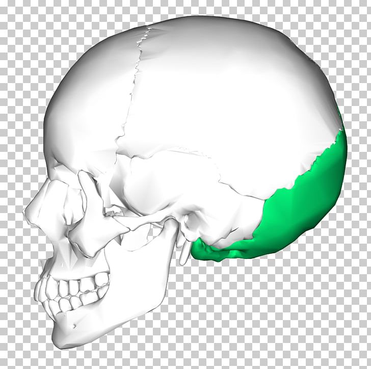 Temporal Bone Occipital Bone Skull Temporal Lobe PNG, Clipart, Anatomy, Base Of Skull, Bone, Cranial Nerves, Fantasy Free PNG Download