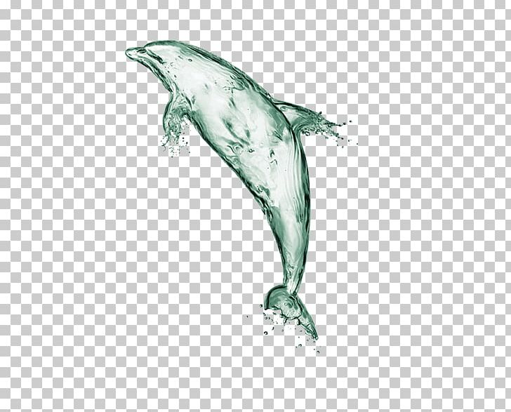 Water Dolphin Euclidean Computer File PNG, Clipart, Animals, Beak, Chemical Element, Decorative, Fauna Free PNG Download