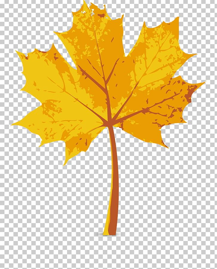 Maple Leaf Autumn PNG, Clipart, Autumn Leaves, Autumn Tree, Autumn Vector, Color, Computer Network Free PNG Download