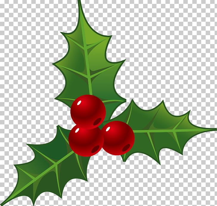 Christmas Decorations Png.Holly Decorations For Christmas Png Clipart Aquifoliales