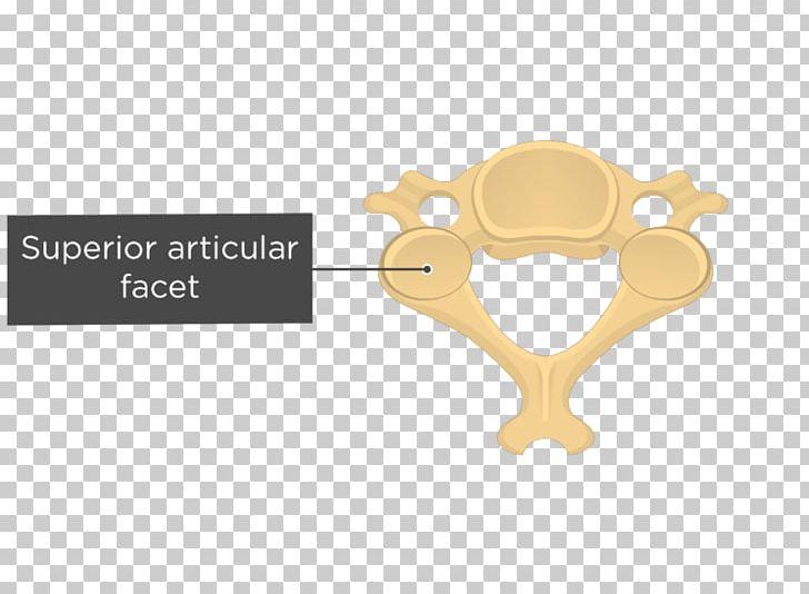 Cervical Vertebrae Articular Processes Axis Vertebral Column