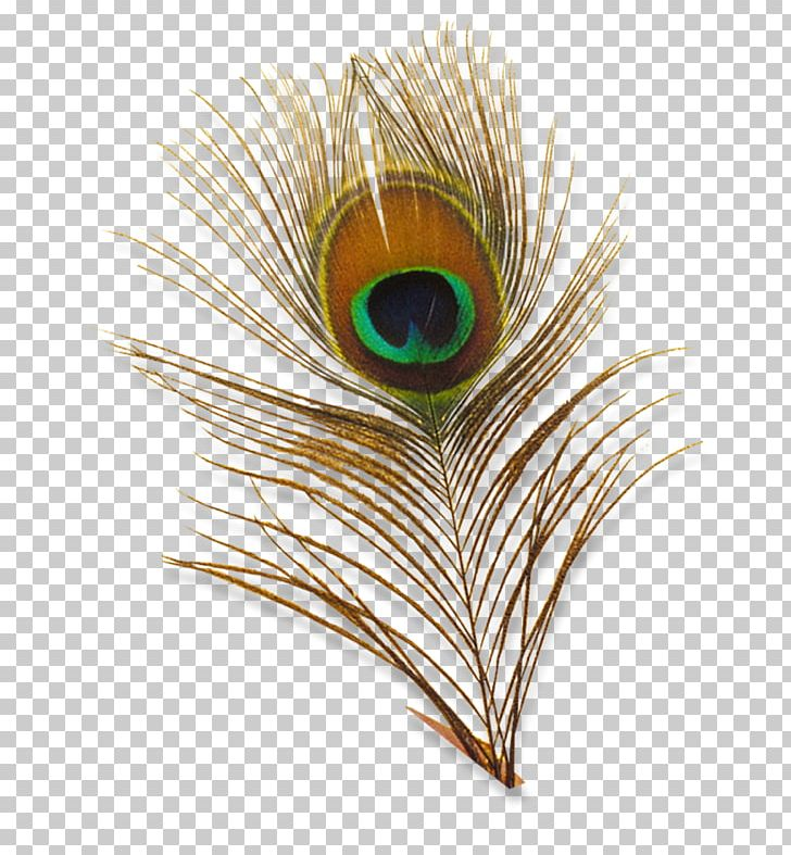 Bird Feather Peafowl PNG, Clipart, Animals, Animation, Bbcode, Bird, Closeup Free PNG Download