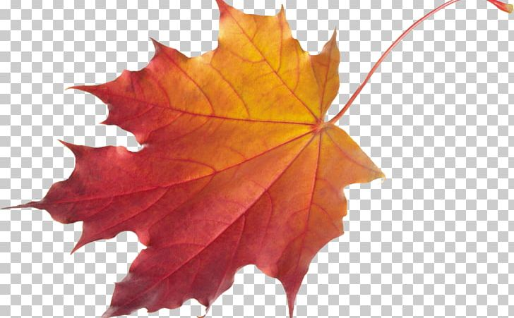 Autumn Leaf Color Desktop PNG, Clipart, Autumn, Autumn Leaf Color, Desktop Wallpaper, Document, Download Free PNG Download