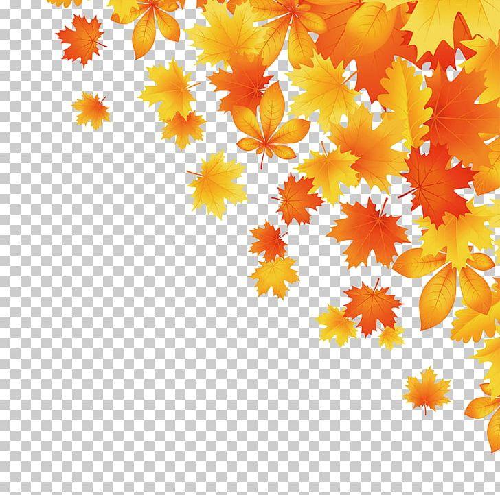 Maple Leaf Autumn Leaves PNG, Clipart, Acer Truncatum, Business, Christmas Decoration, Company, Decor Free PNG Download