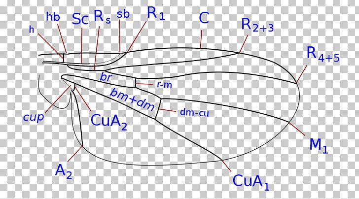 Organism Line Point Angle PNG, Clipart, Angle, Area, Art, Blue, Circle Free PNG Download