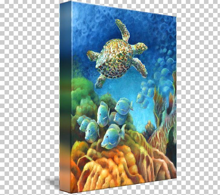 Loggerhead Sea Turtle Coral Reef Fish Underwater PNG, Clipart, Coral, Coral Reef, Coral Reef Fish, Ecosystem, Emydidae Free PNG Download