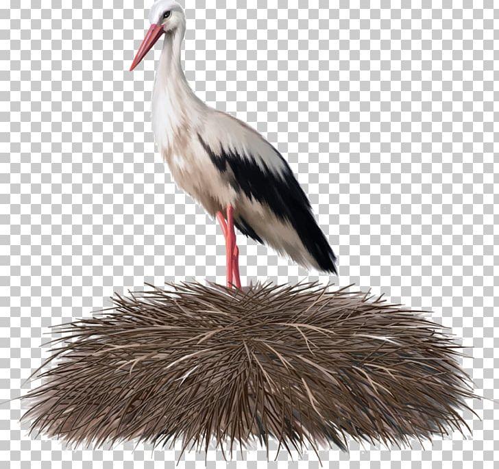 White Stork Bird Nest Crane PNG, Clipart, Animal, Beak, Bird