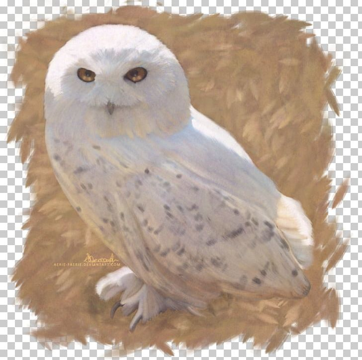 Owl Harry Potter And The Deathly Hallows Hedwig Fictional Universe Of Harry Potter PNG, Clipart, Art, Beak, Bird, Bird Of Prey, Deviantart Free PNG Download