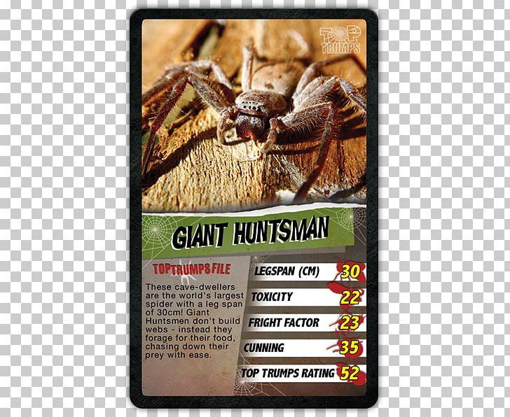 Crab Spiders Australia Invertebrate Huntsman Spider PNG, Clipart