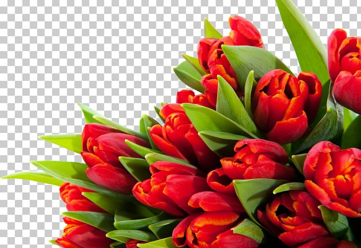 Tulip Flower Bouquet Desktop March 8 PNG, Clipart, Cut Flowers, Desktop Wallpaper, Floral Design, Floristry, Flower Free PNG Download