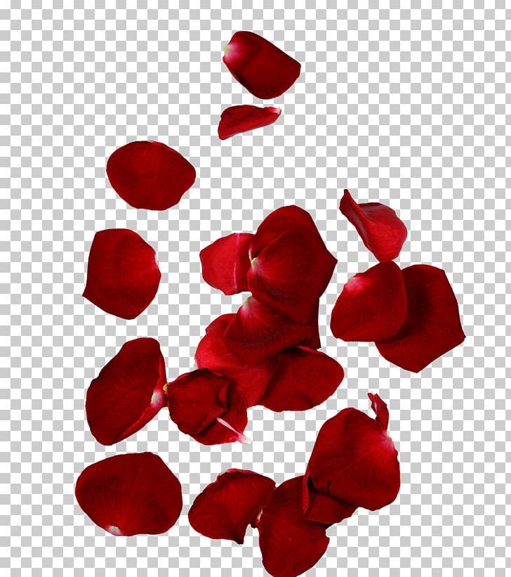 Rose Petal Flower Leaf PNG, Clipart, Color, Cut Flowers, Flower, Flowering Plant, Flowers Free PNG Download