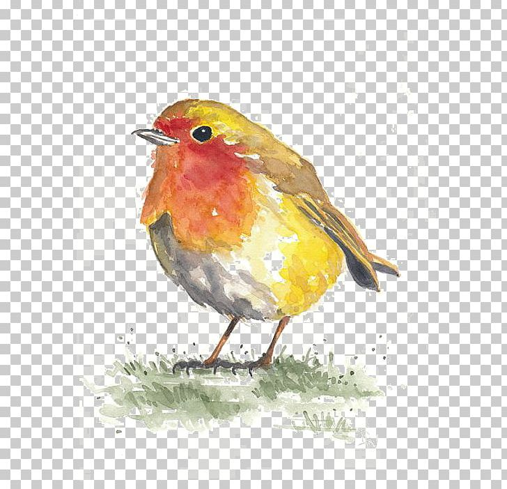 Bird Watercolor Painting Paper Drawing PNG, Clipart, Animals, Art, Beak, Bird Cage, Bird Nest Free PNG Download