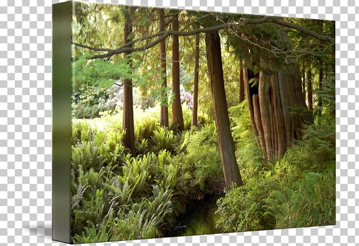 Stanley Park Temperate Broadleaf And Mixed Forest Woodland Vegetation PNG, Clipart, Biome, British Columbia, Ecosystem, Flora, Forest Free PNG Download