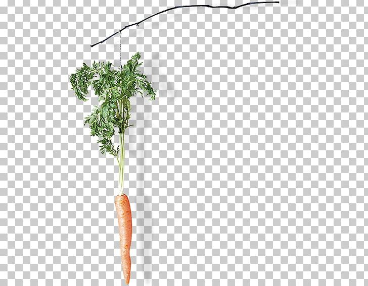 Plant Stem PNG, Clipart, Branch, Carrot, Carrot Creative, Creative, Plant Free PNG Download