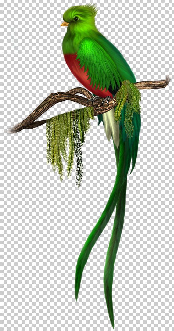 Bird Quetzal Green PNG, Clipart, Animal, Art Green, Beak, Bird, Bird Flight Free PNG Download
