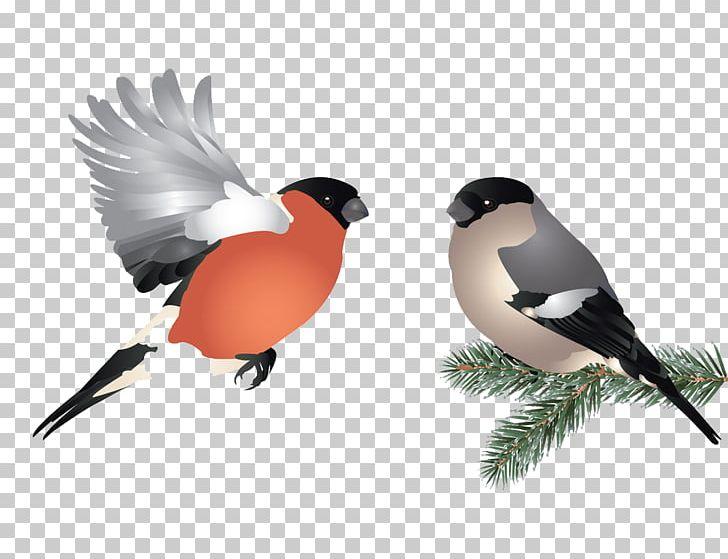 Bird Flight Illustration PNG, Clipart, Animals, Animal World, Beak, Bird, Bird Cage Free PNG Download