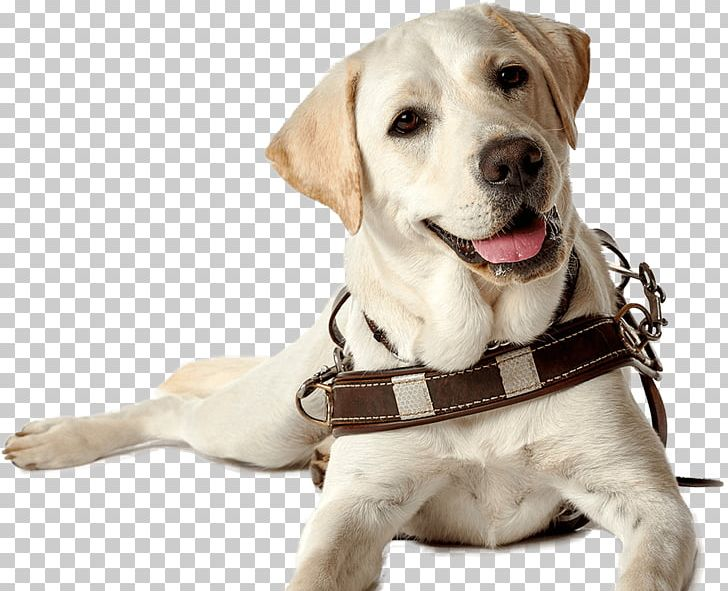 Volunteering: why guide dog puppy raising is so important.