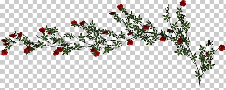Beach Rose Vine PNG, Clipart, Adobe Illustrator, Branch, Christmas Decoration, Cut Flowers, Download Free PNG Download