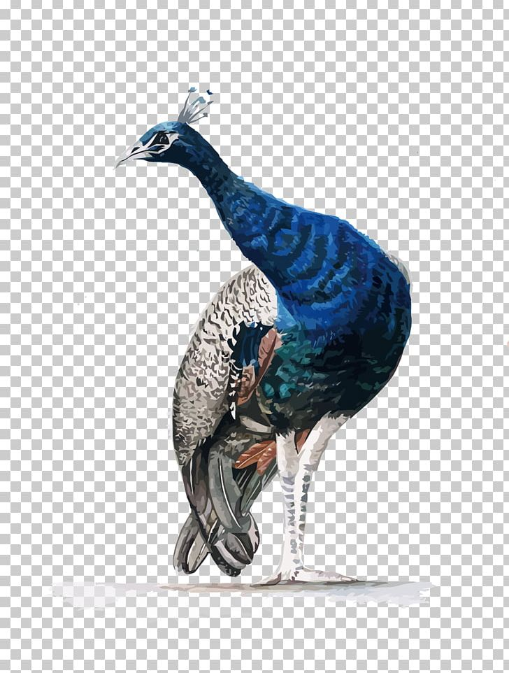 Watercolor Painting Asiatic Peafowl PNG, Clipart, Animals, Asiatic Peafowl, Bird, Colored Pencil, Feather Free PNG Download