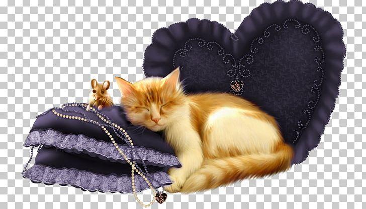 Kitten Whiskers Cat PNG, Clipart, Animal, Animals, Carnivoran, Cat, Cat Like Mammal Free PNG Download