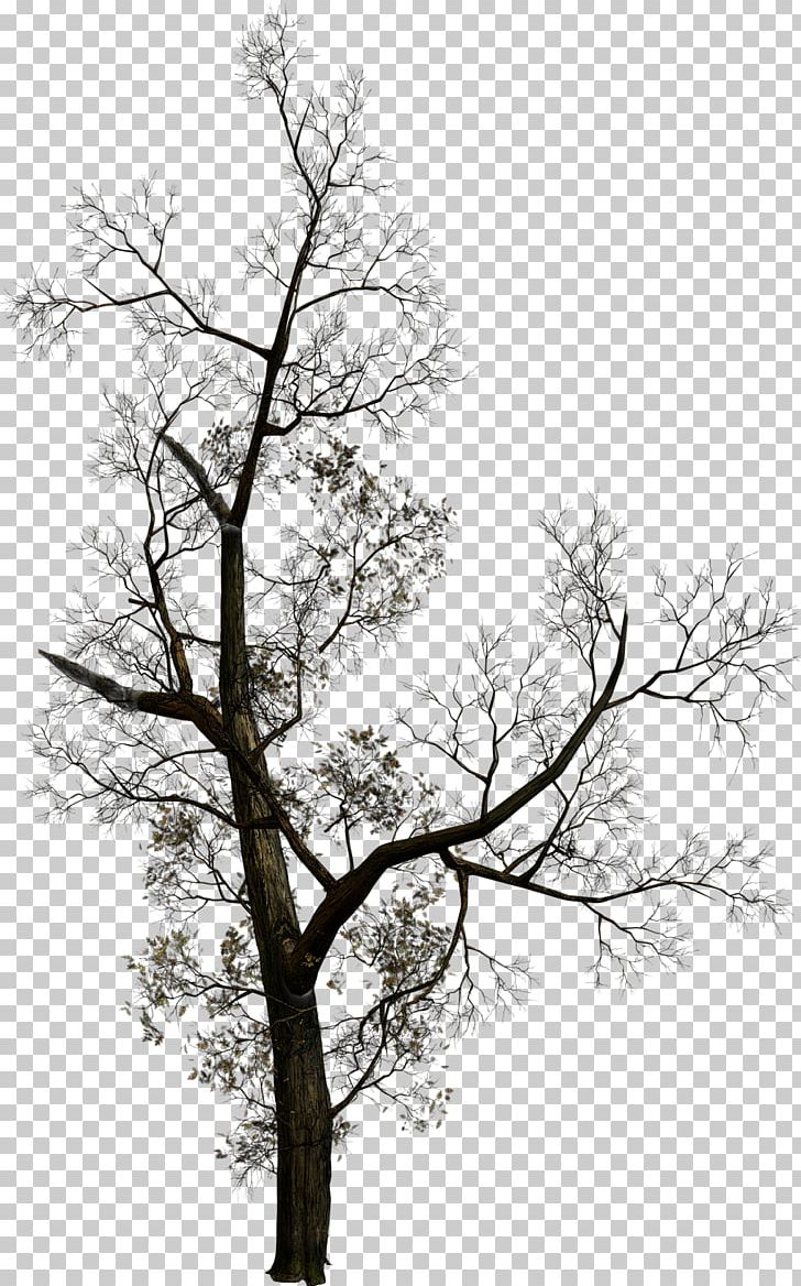 Tree PNG, Clipart, Black And White, Branch, Clip Art, Computer Software, Download Free PNG Download