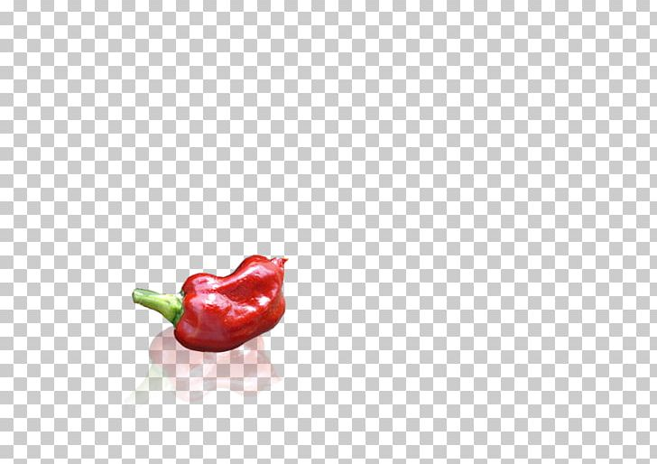 Habanero Piquillo Pepper Capsicum Annuum Var. Acuminatum Serrano Pepper Tabasco Pepper PNG, Clipart, Bell Pepper, Bell Peppers And Chili Peppers, Body Jewelry, Cayenne Pepper, Chili Free PNG Download