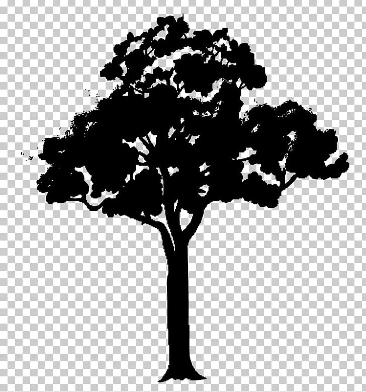 Tree Cartoon Png Clipart Animation Art Black And White Branch Cartoon Free Png Download Pngtree offers over 9 black and white tree png and vector images, as well as transparant. tree cartoon png clipart animation