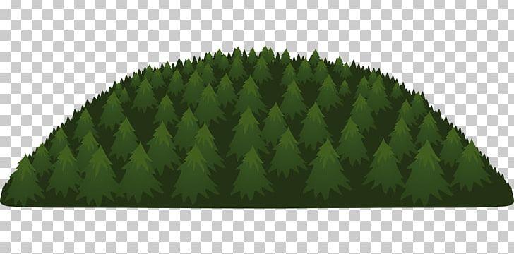 Tree Forest Evergreen Conifers PNG, Clipart, Austrocedrus, Cedar, Coast Redwood, Conifers, Deciduous Free PNG Download