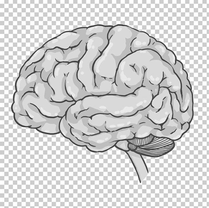 Brain Cerebrum Spinal Cord Drawing PNG, Clipart, Black And White, Brain, Central Nervous System, Cerebellum, Cerebrum Free PNG Download