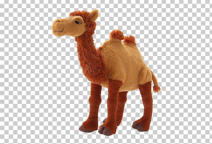 camel camel camel amazon
