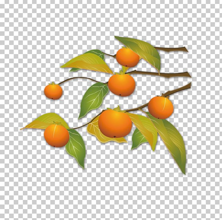Kumquat Autumn PNG, Clipart, Advertising, Autumnal, Autumn Background, Autumn Leaf, Bac Free PNG Download