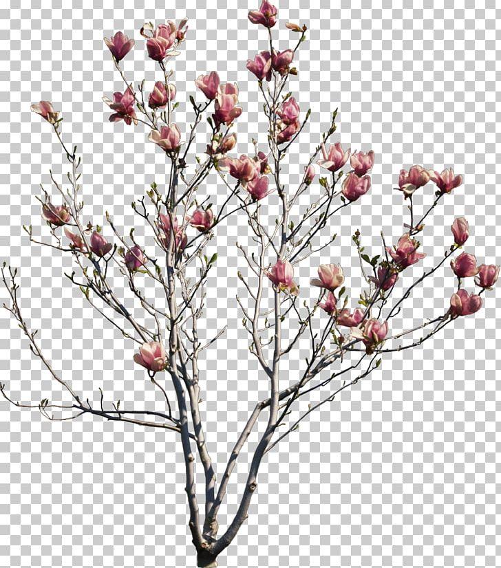 Cherry Blossom Treebranch Silhouette Jasa Desain Grafis