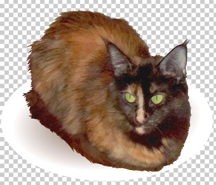 Asian Semi Longhair Nebelung Whiskers Balinese Cat Png