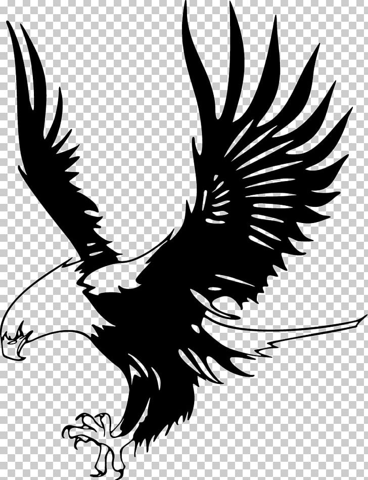 Bald Eagle Just Eagles Black And White Hawk Eagle Png Clipart Bald Eagle Beak Bird Bird