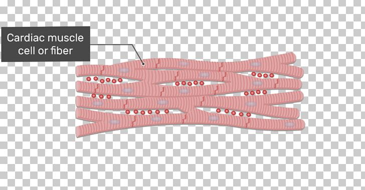 Intercalated Disc Cardiac Muscle Gap Junction Muscle Tissue Skeletal Muscle PNG, Clipart, Anatomy, Angle, Cardiac Muscle, Cardiac Muscle Cell, Cell Junction Free PNG Download