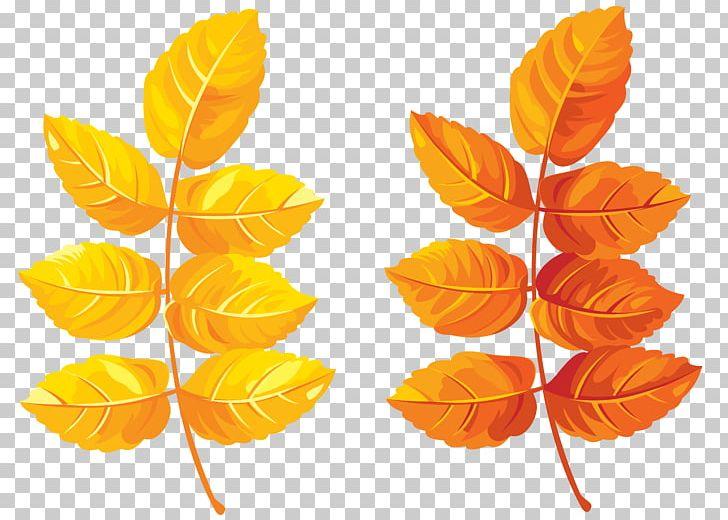 Autumn Leaf Color PNG, Clipart, Autumn, Autumn Leaf Color, Autumn Leaves, Branch, Clip Art Free PNG Download