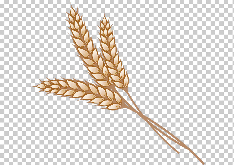 Wheat PNG, Clipart, Barley, Cereal, Cereal Germ, Crop, Einkorn Wheat Free PNG Download