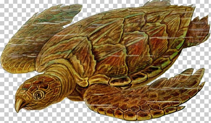 Sea Turtle Prehistory Carbonemys PNG, Clipart, Animal, Animals, Box Turtle, Carbonemys, Computer Icons Free PNG Download