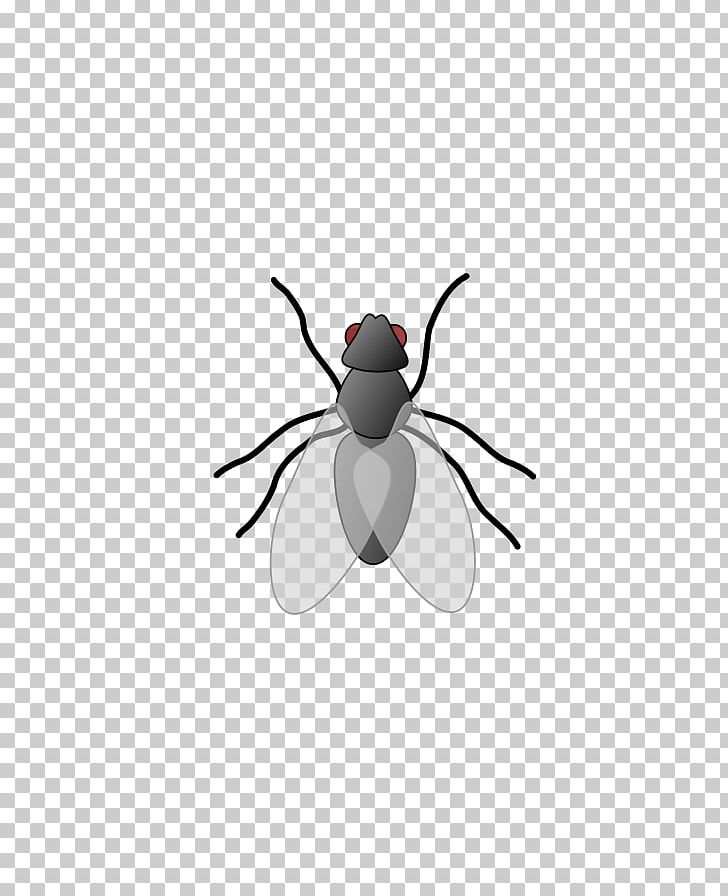 Free Content Insect PNG, Clipart, Arthropod, Artwork, Beetle, Blog, Download Free PNG Download
