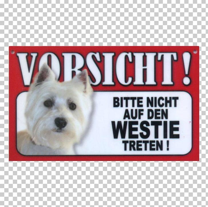 West Highland White Terrier Cairn Terrier Bolonka Puppy