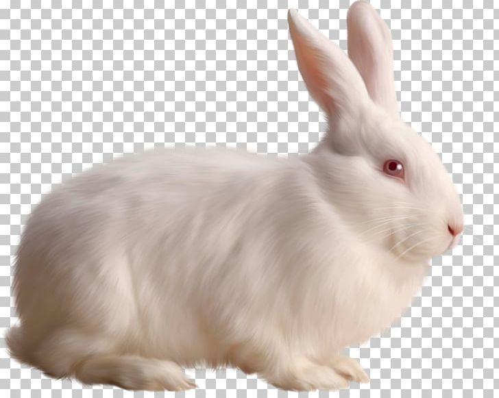 Cottontail Rabbit I Love Bunnies Bunnies & Rabbits European Rabbit PNG, Clipart, Animals, Bunnies Rabbits, Computer Icons, Cottontail Rabbit, Domestic Rabbit Free PNG Download
