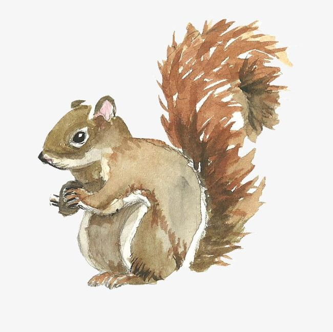 Cute Squirrel PNG, Clipart, Animal, Cute Clipart, Cute Clipart, Squirrel, Squirrel Clipart Free PNG Download
