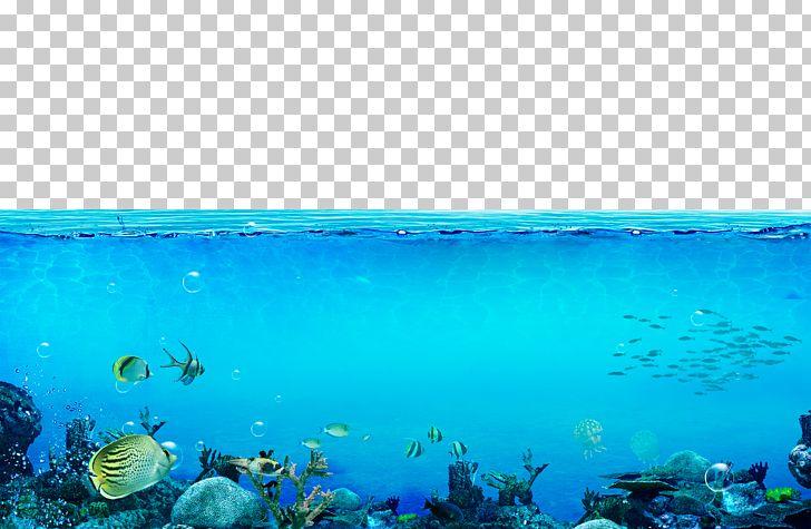 imgbin underwater sea the underwater world sea creatures QmC8Wwm24Yra8V3XF9TB6BqdL