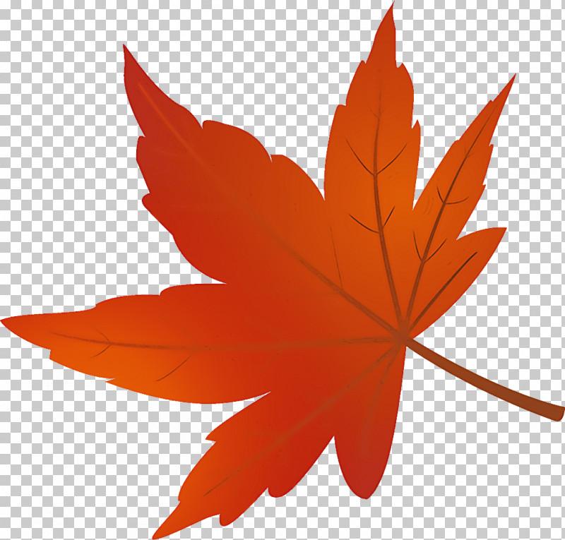 Maple Leaf Autumn Leaf Yellow Leaf PNG, Clipart, Autumn Leaf, Black Maple, Deciduous, Flower, Leaf Free PNG Download