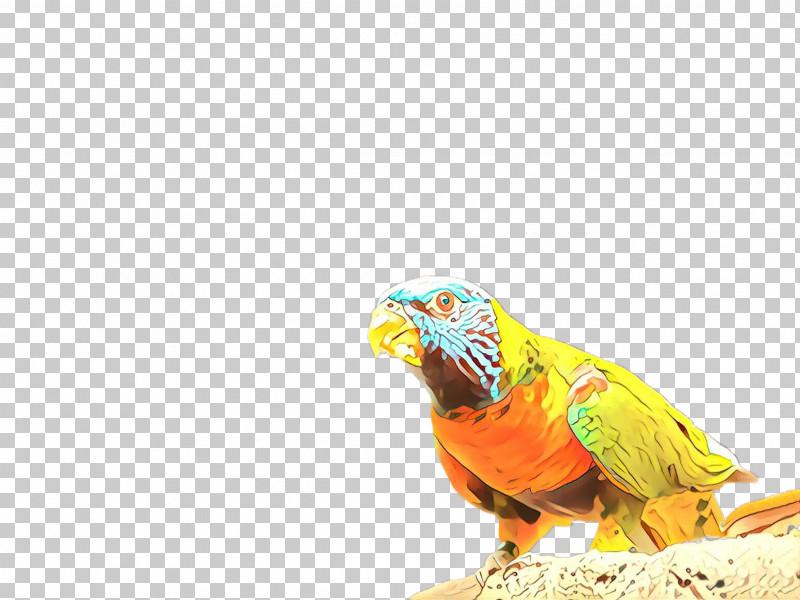 Parrot Bird Macaw Beak Parakeet PNG, Clipart, Beak, Bird, Budgie, Macaw, Parakeet Free PNG Download