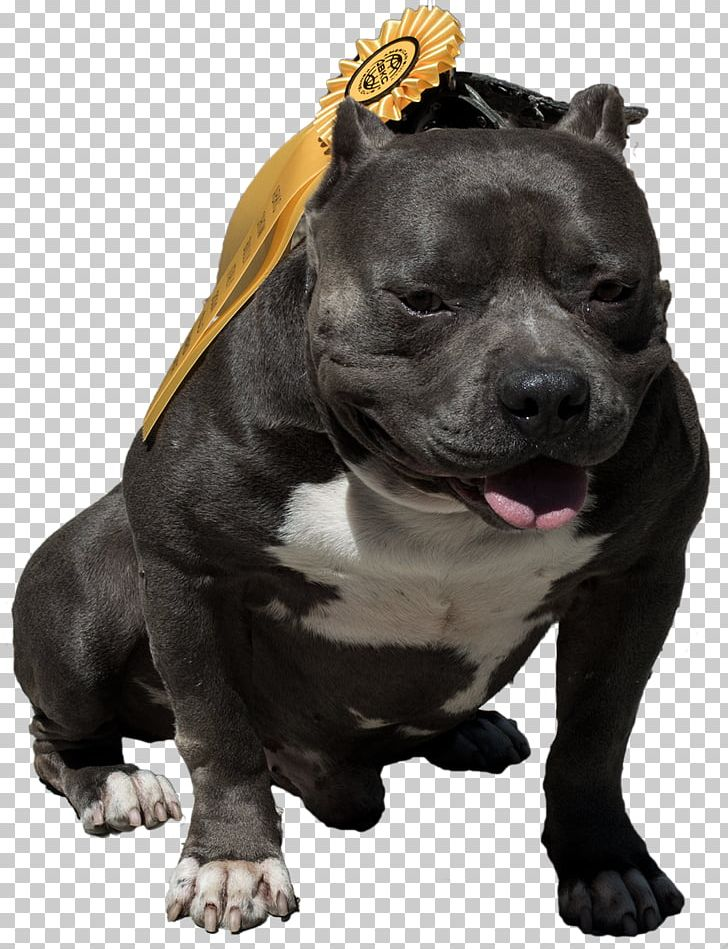 is american staffordshire terrier a pitbull